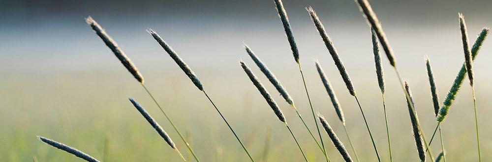 Bole en naturlig del av nordiskt lantbruk